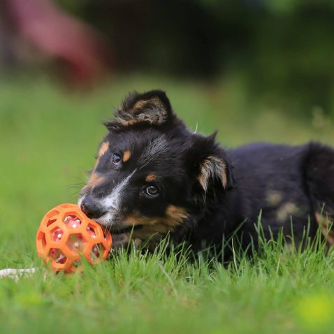Exercise Puppies & Adult Dogs - How Much Exercise Does My Dog Need?
