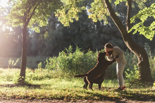 How Much Exercise Does a Dog Need Every Day