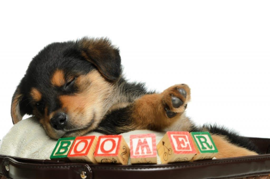 most popular boy dog names