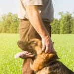 What are the Benefits of Pet Insurance?