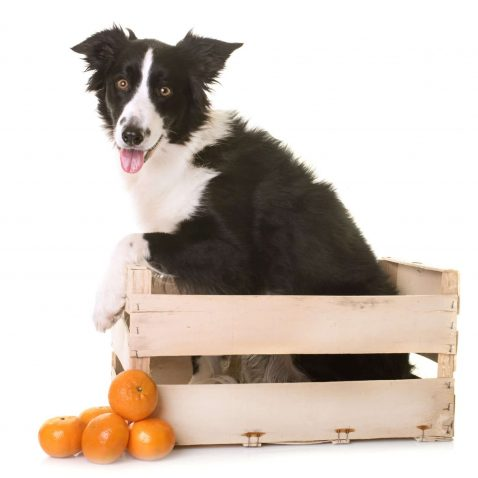 Can Dogs Eat Fruit?