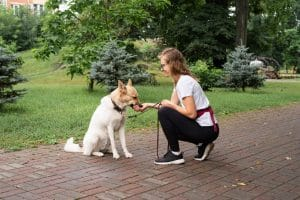Obedience training for dog