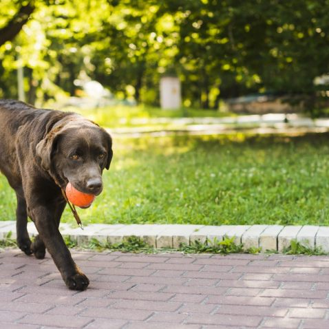 How Does Pet Insurance Work