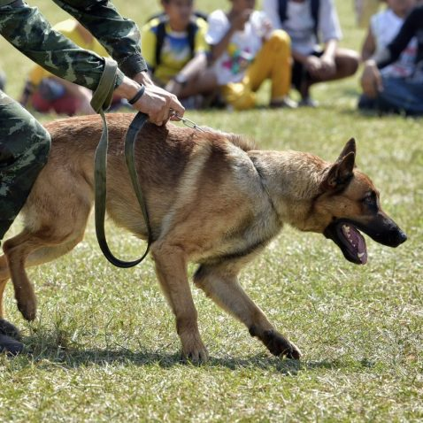 How do Police Dogs help Humans?