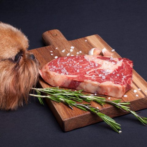 Can Dogs Eat Pork or Raw Meat?