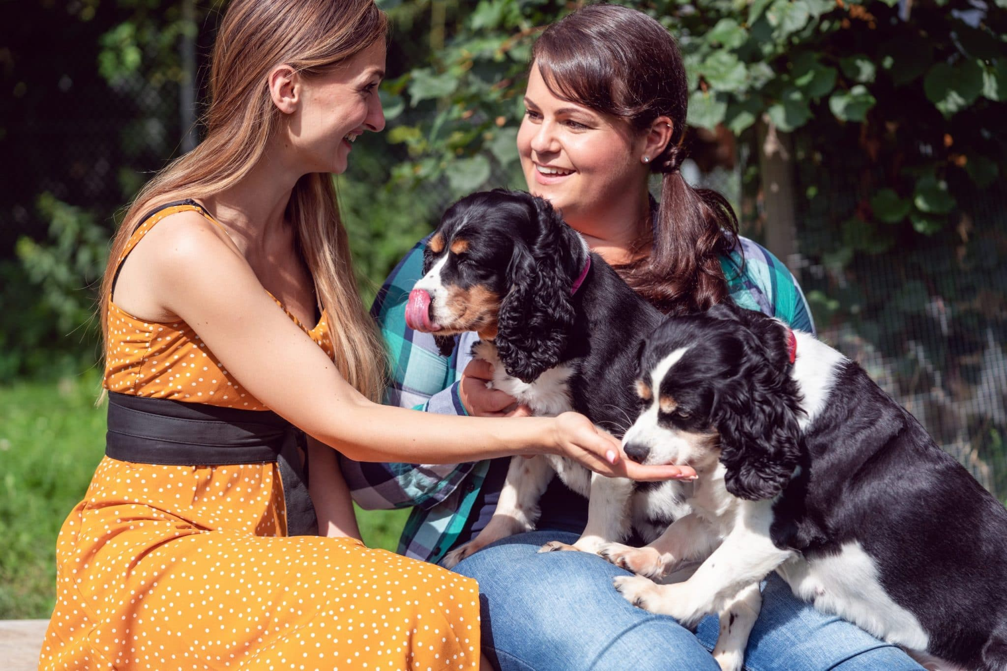 How To Socialize Your Dog With Other Dogs And Humans