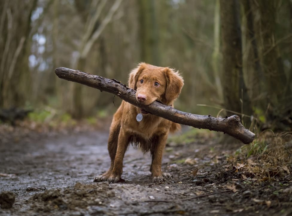 Dog outdoor in the woods