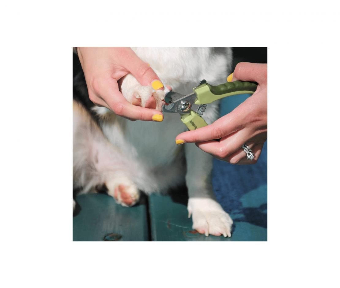 Safari Professional Stainless Steel Nail Trimmer for Dogs