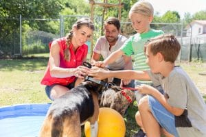 how to socialize your dog