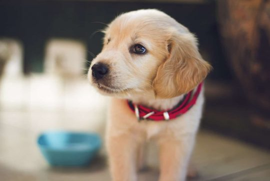 Is Having Pet Insurance Worth it?