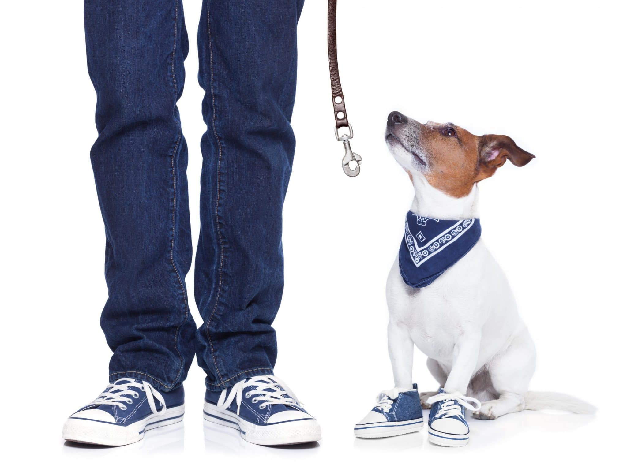 9 Good Habits To Teach Your Dog
