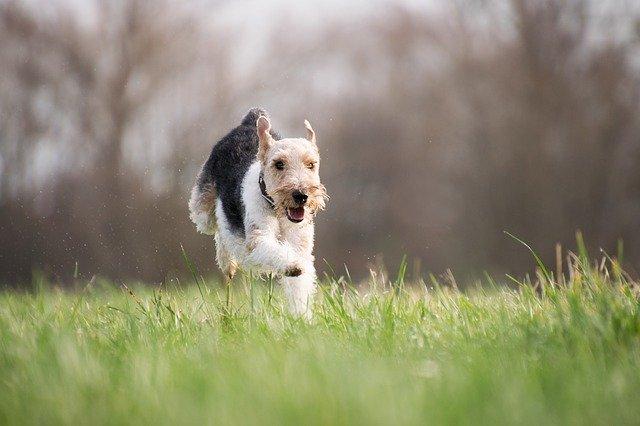 dog running free